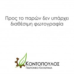 ΠΟΡΤΟΚΑΛΙΑ ΤΑΡΟΚΟ 25Lt 0,70m